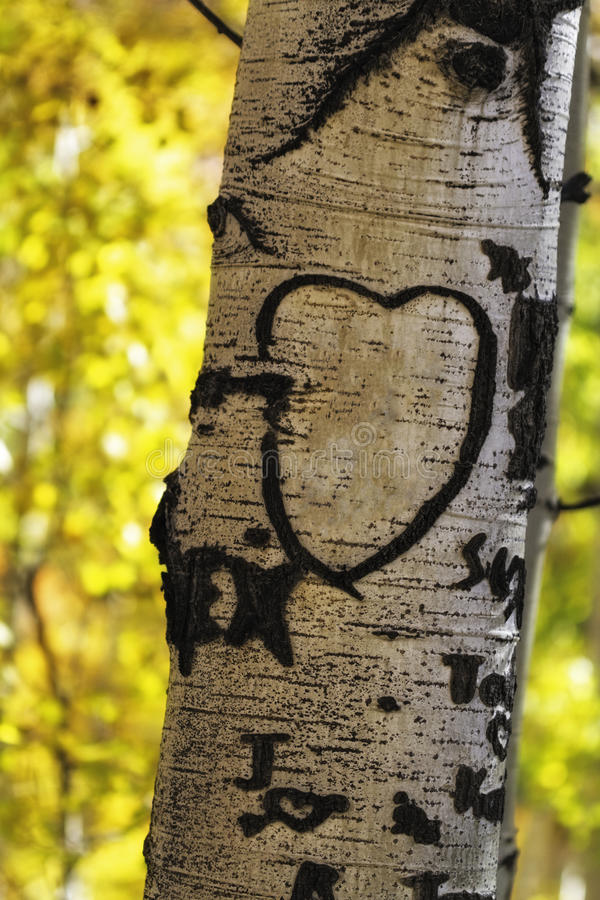 Download Aspen Tree Heart stock image. Image of scenic, mountains - 37686735