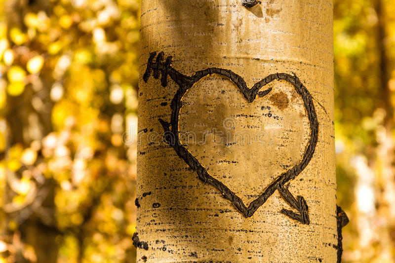 Aspen Tree Hearts lizenzfreie stockfotos