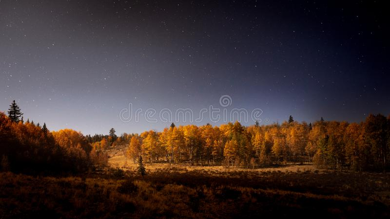 Aspen Trees Lit By der Mond nachts stockbilder