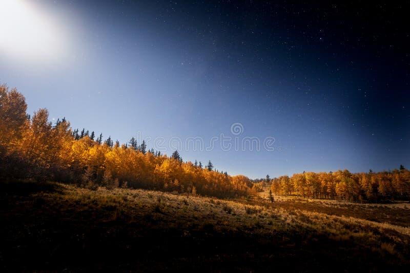 Aspen Trees Lit By der Mond nachts lizenzfreies stockbild