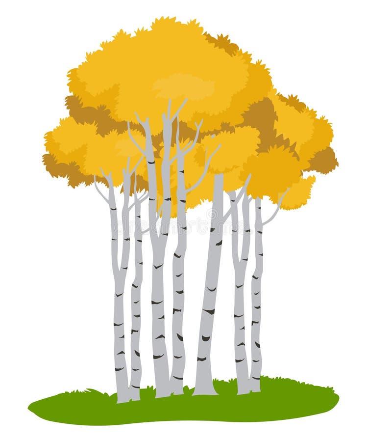 Aspen trees.Tree illustration ,Autumn tree. Aspen trees vector illustration isolated on white background vector illustration
