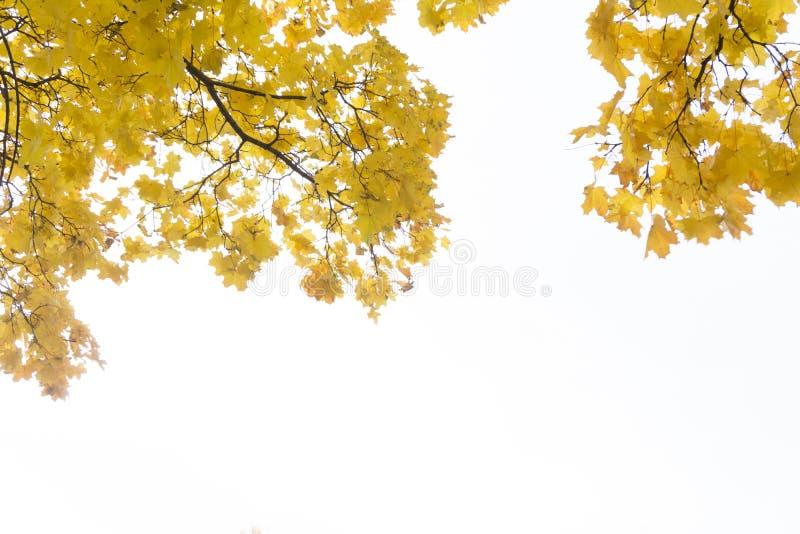 Aspen verzweigt sich in den Fall gegen den blauen Himmel lizenzfreies stockbild