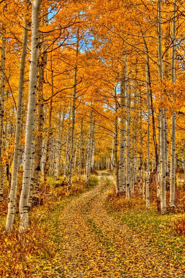 Aspen Way stockbilder
