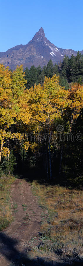 Free Aspens And Bear Tooth Stock Photo - 23170710