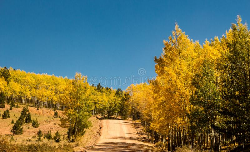 Aspens Turning in Fall near Cripple Creek. These aspens are turning gold, red and yellow in the fall on a dirt road near Cripple Creek, Colorado. This is a stock photography