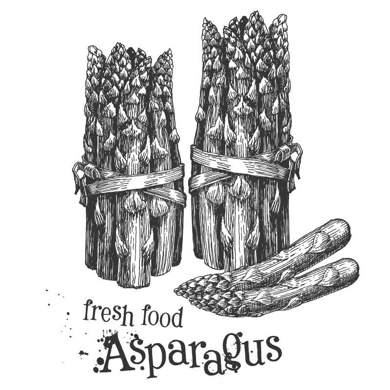 Asperge op een witte achtergrond schets royalty-vrije illustratie