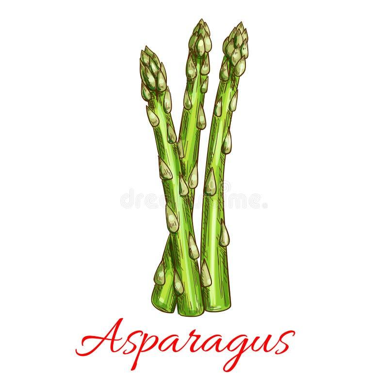 Asperge plantaardige stam geïsoleerde schets royalty-vrije illustratie