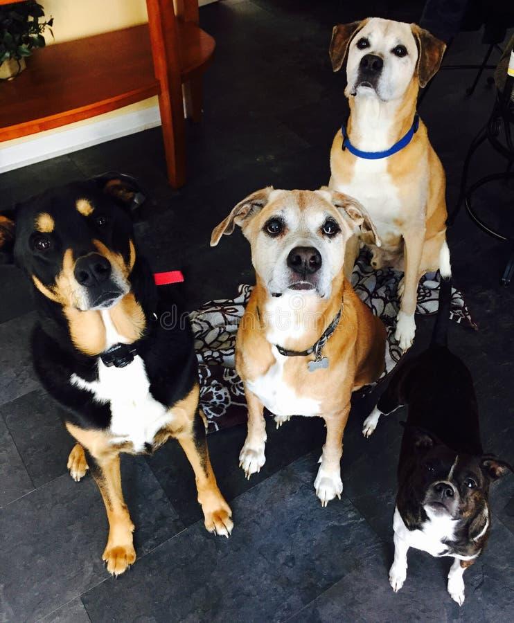 Aspettando i nostri ossequi del cane fotografia stock libera da diritti