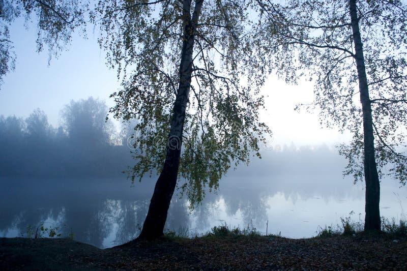 Aspettando l'alba di mattina nella foresta fredda e nella nebbia densa in autunno fotografie stock