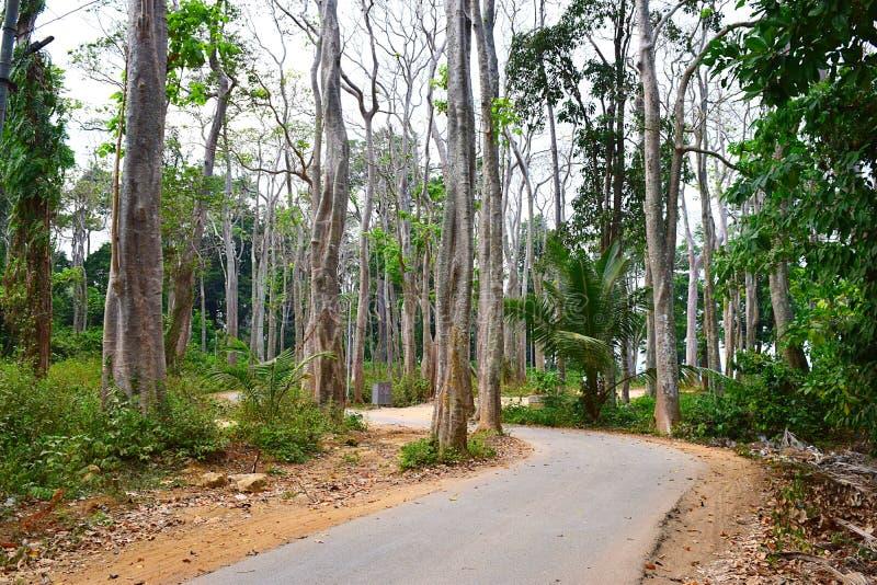 Asphalt Concrete Road scenico attraverso le palme e gli alberi alti di Mohua del mare - Neil Island, andamane, India immagine stock