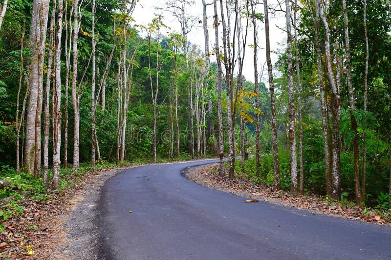 Asphalt Concrete Road scenico tramite la foresta e la pianta dense in un villaggio indiano fotografie stock