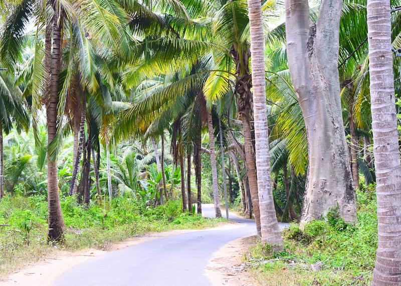 Asphalt Concrete Road scenico tramite le palme, i cocchi e la pianta - Neil Island, andamane, India immagini stock libere da diritti