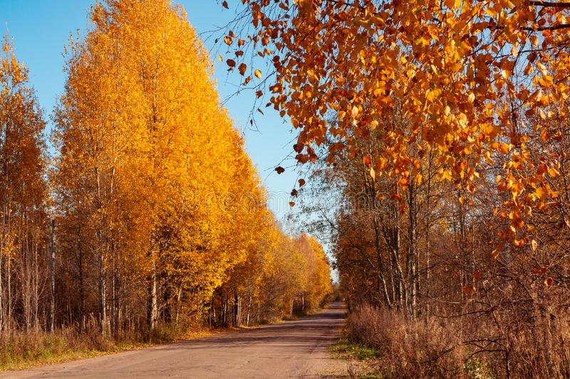 Asphalt country road through the autumn forest - beautiful autumn landscape royalty free stock photos