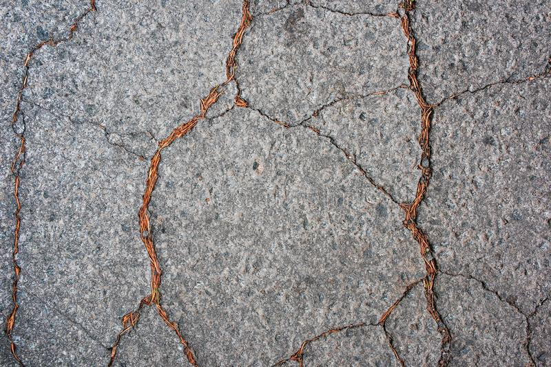Asphalt with cracks and dry needles of pine from above royalty free stock images