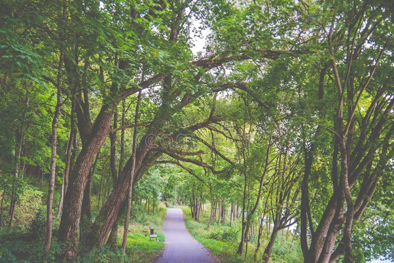 Asphalt path in forest old trees. In forest park stock images