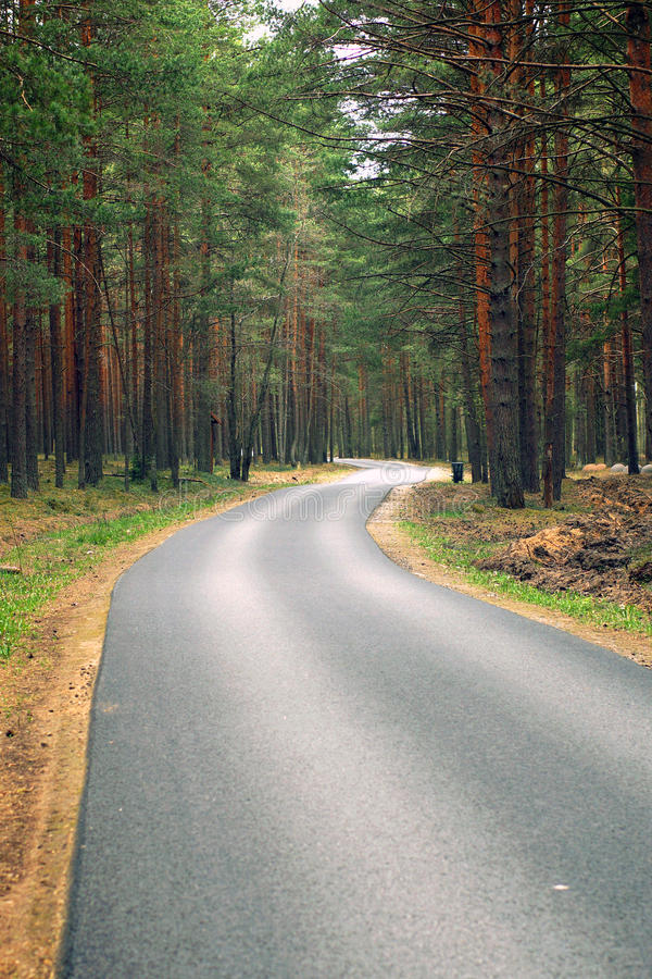 Asphalt path, going away, a pine forest on both sides, a place for cycling and rest.  royalty free stock photo
