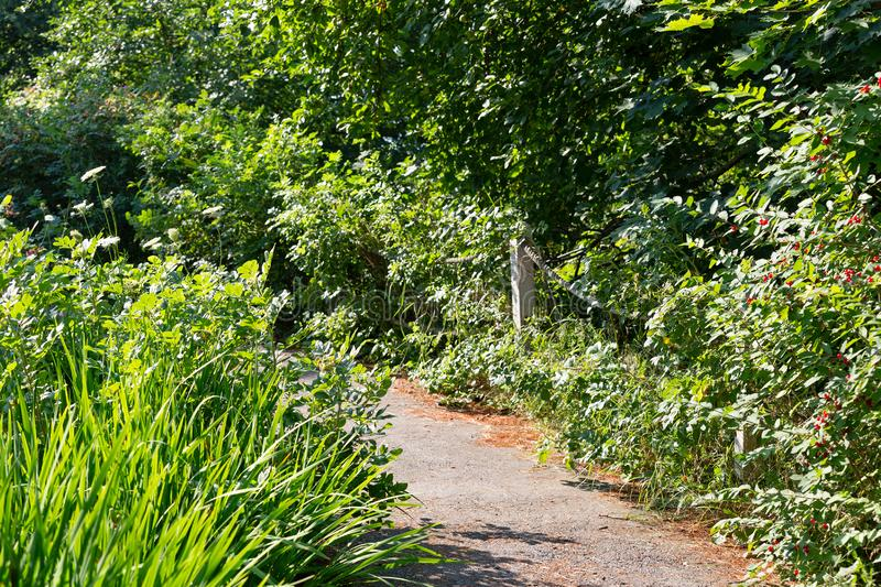 Asphalt pathway through an overgrown garden. An asphalt pathway through and overgrown garden with flowers and trees stock photography
