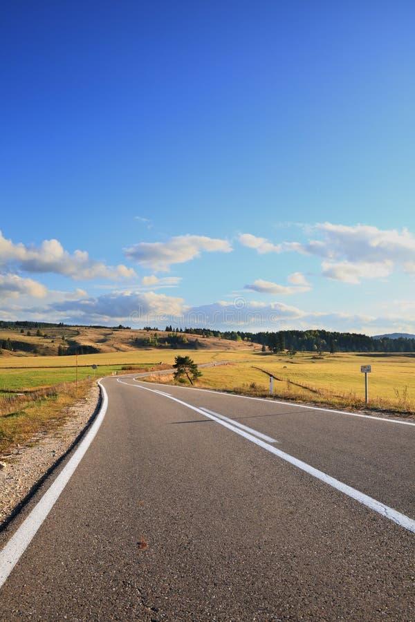 Asphalt Road. In golden meadow stock photo