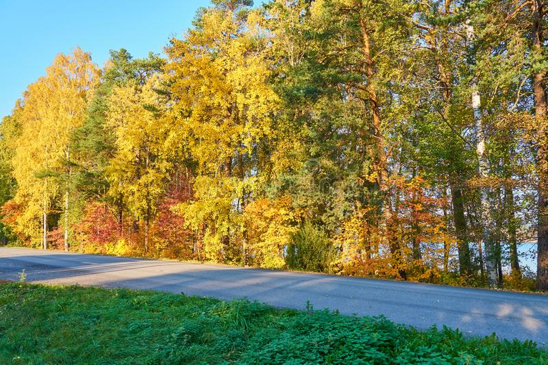 Asphalt road with autumn colorful trees on a background and green grass on a foreground. Asphalt road with autumn colorful trees on a background and green grass royalty free stock images