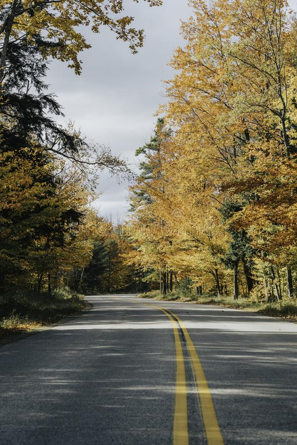 Asphalt road in autumn forest. Sunny day stock photo
