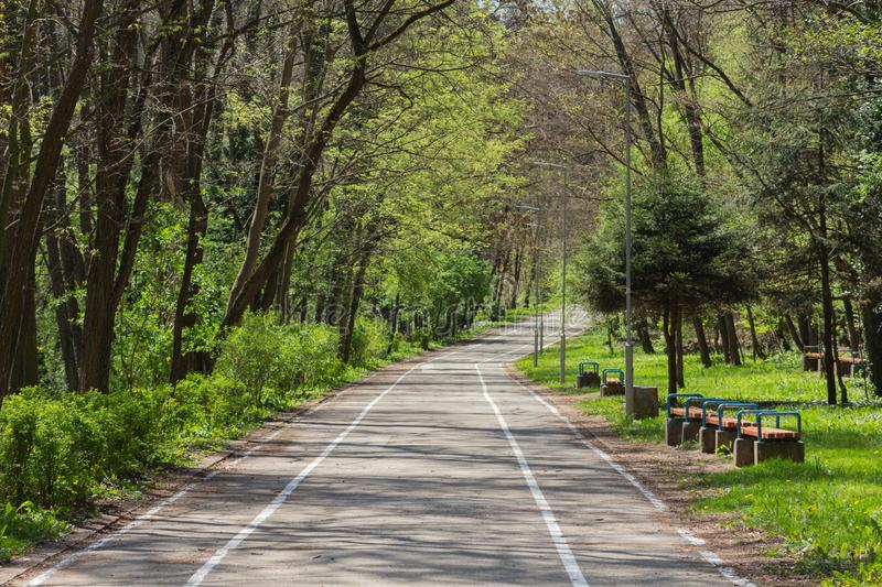 bike lane in the middle of the green forest royalty free stock photos