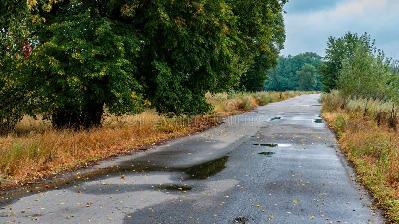 Asphalt Road Covered With Falling se va después de la lluvia imagenes de archivo