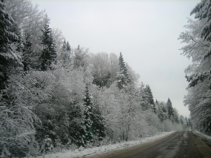 Asphalt road in the deep forest on a wet winter day royalty free stock photography