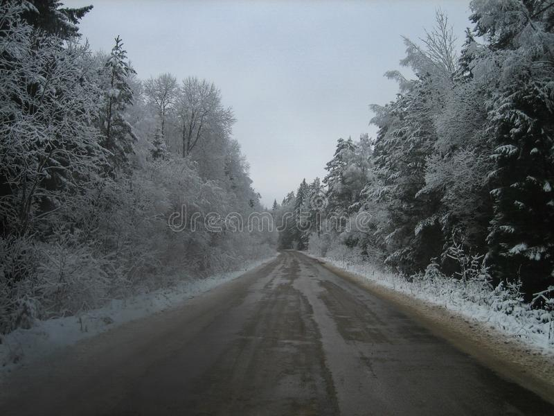 Asphalt road in the deep forest on a wet winter day royalty free stock images