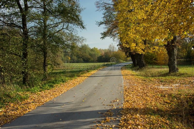 Asphalt road, fallen leaves and autumnal yellow trees. View on a sunny day royalty free stock photo