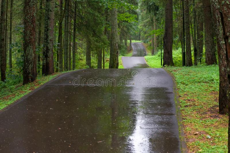 Tape road through the forest. Asphalt road through the forest on a rainy day stock photo
