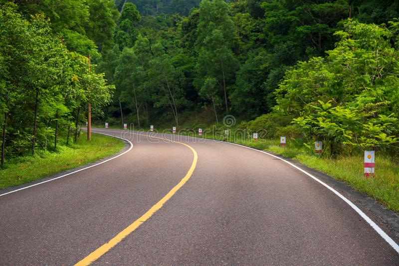 Asphalt road in green forest. Sunny day journey to nature. Straight road in wild forest. royalty free stock photo