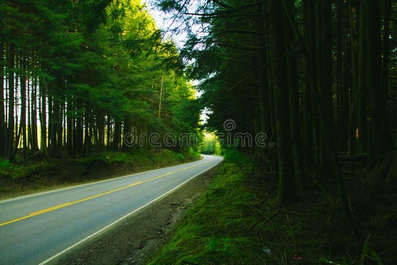 Asphalt Road Between Green Trees stock photography