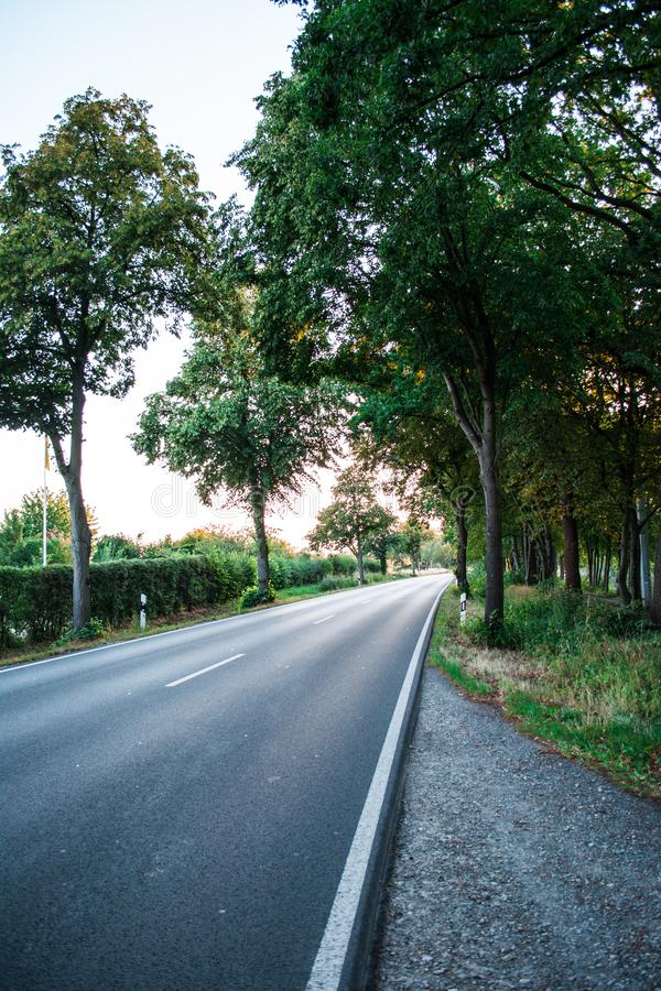 Asphalt road between green trees in the allee at the sunset. Grey royalty free stock image