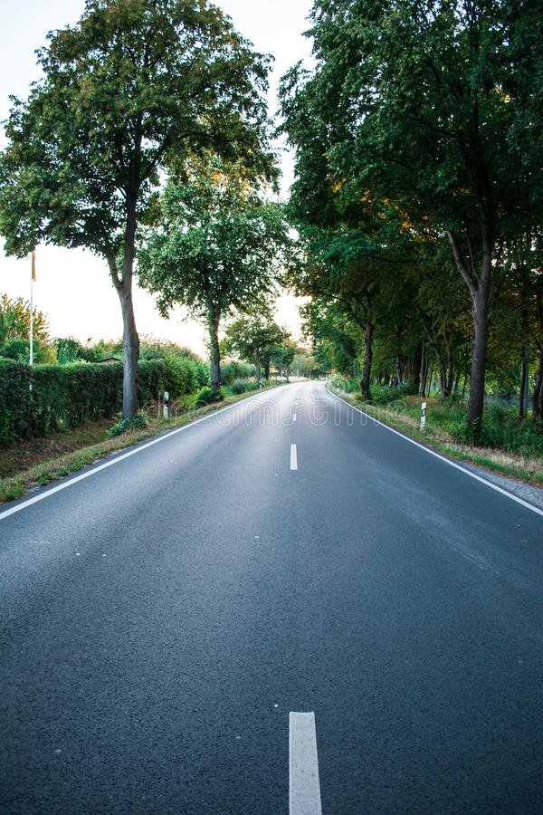 Asphalt road between green trees in the allee at the sunset. Grey stock images