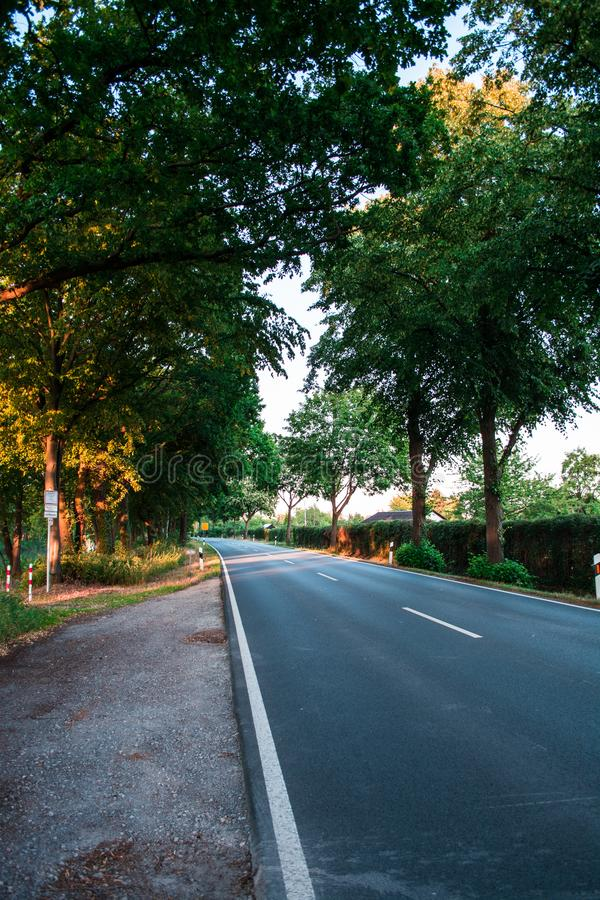 Asphalt road between green trees in the allee at the sunset. Grey stock photos