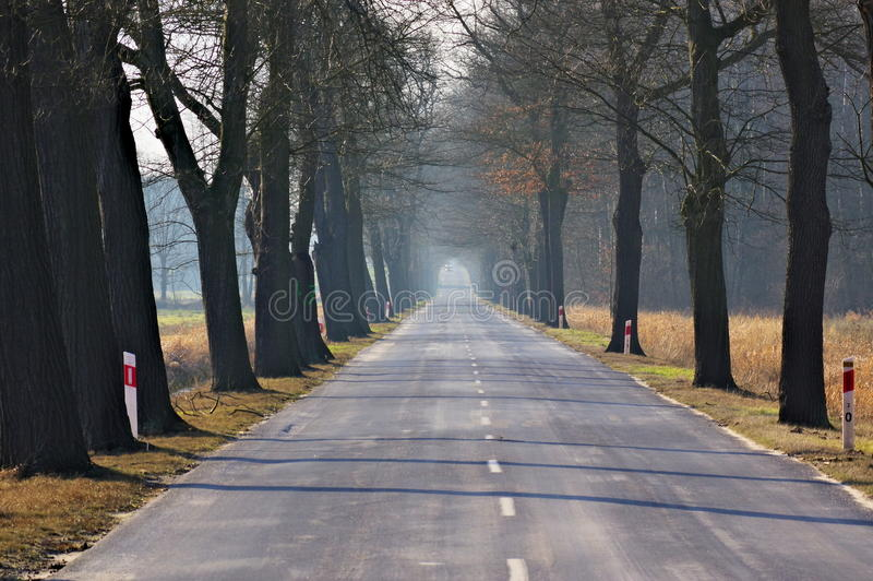 Asphalt road. The photo shows the asphalt, straight path. Middle of the road is a white dotted line. On both sides of the road grow tall trees. It is late royalty free stock photography