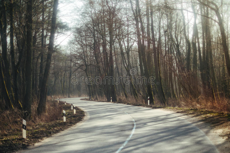 Asphalt road running through foggy forest royalty free stock photography