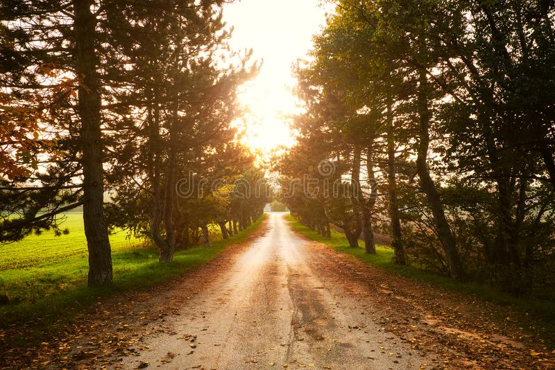 Asphalt road running through summer tree alley. Sunny weather stock images