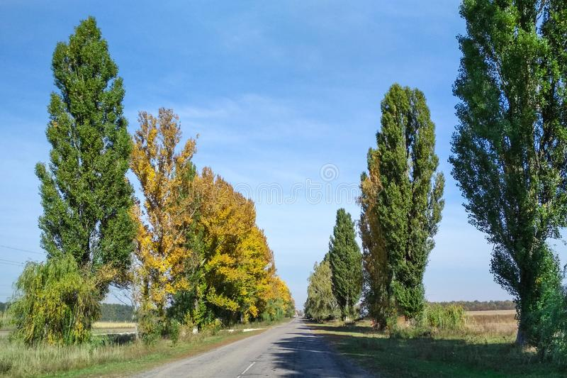 Asphalt road in summertime with trees royalty free stock image