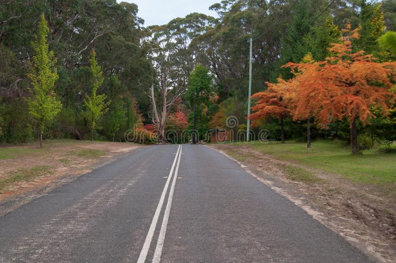 Asphalt road with white dividing lines and autumn trees on roadside. Autumn trip to Mount Wilson, Australia royalty free stock image