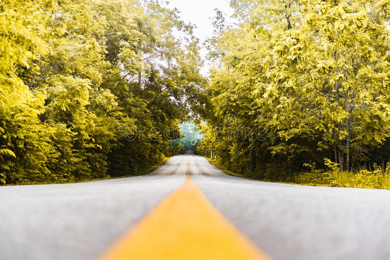 Asphalt road with yellow diving line and forest. Background stock image
