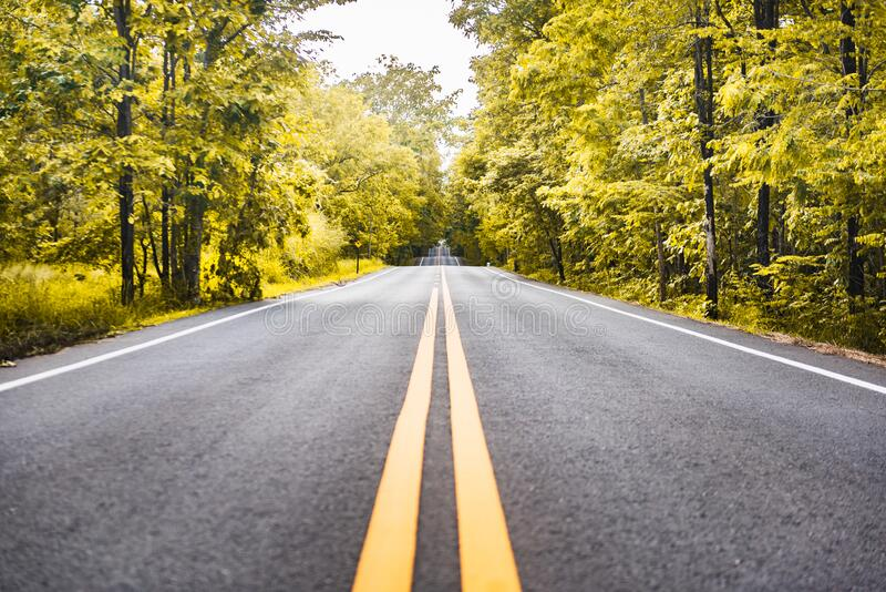 Asphalt road with yellow diving line and forest. Background royalty free stock images