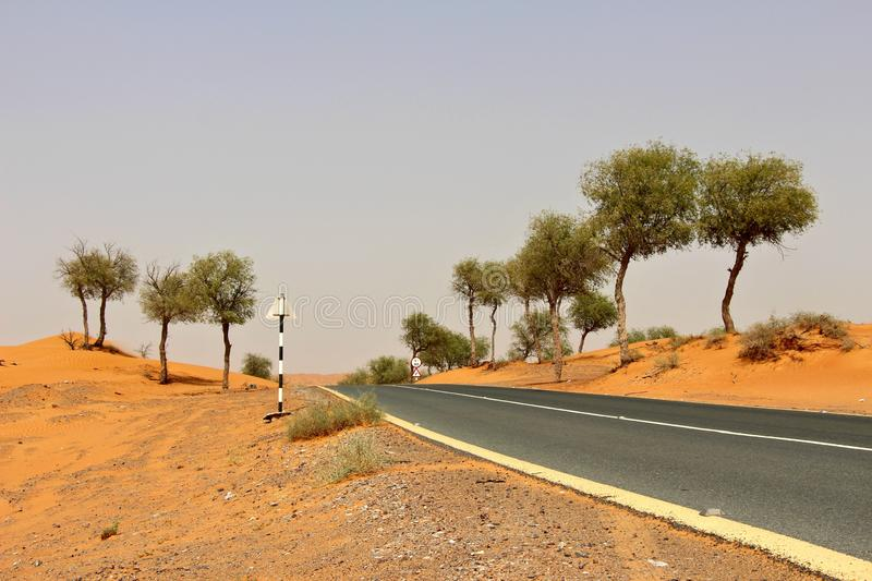 Asphalt road with yellow lines running through desert with trees royalty free stock photos
