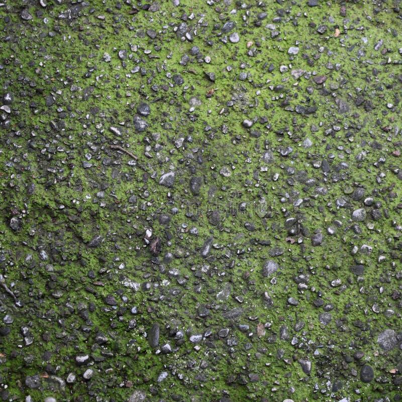 asphalte couvert de mousse, fond sans couture et tileable photo stock