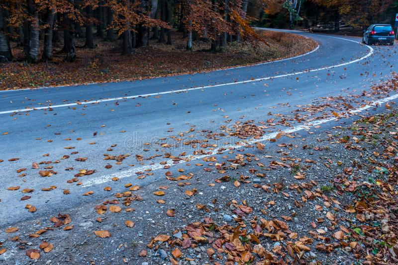 Asphaltstraße mit gelben Blättern bedeckt, vorbeifahrendes Auto im Hintergrund lizenzfreies stockfoto