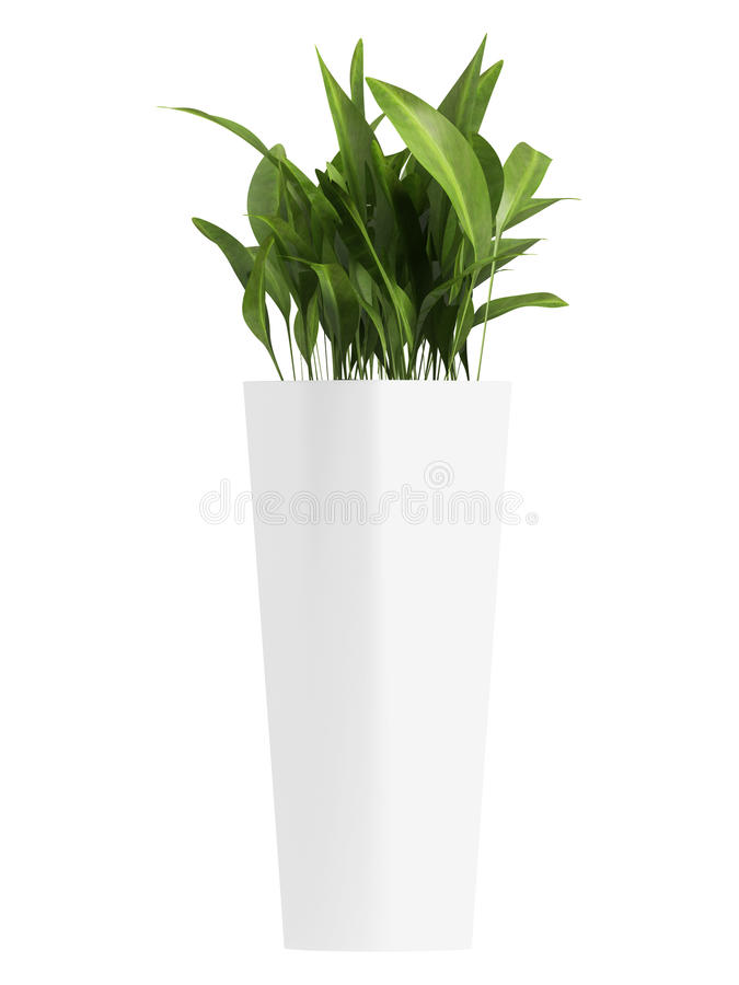 Free Aspidistra In Triangular Container Royalty Free Stock Images - 26803569