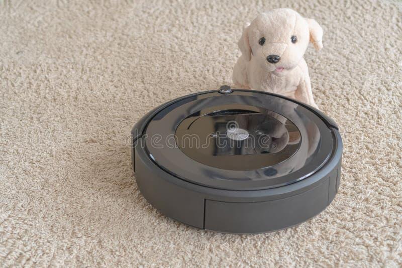 Aspirador del robot con un perro en una alfombra beige limpia El concepto de limpieza y de comodidad en casa foto de archivo