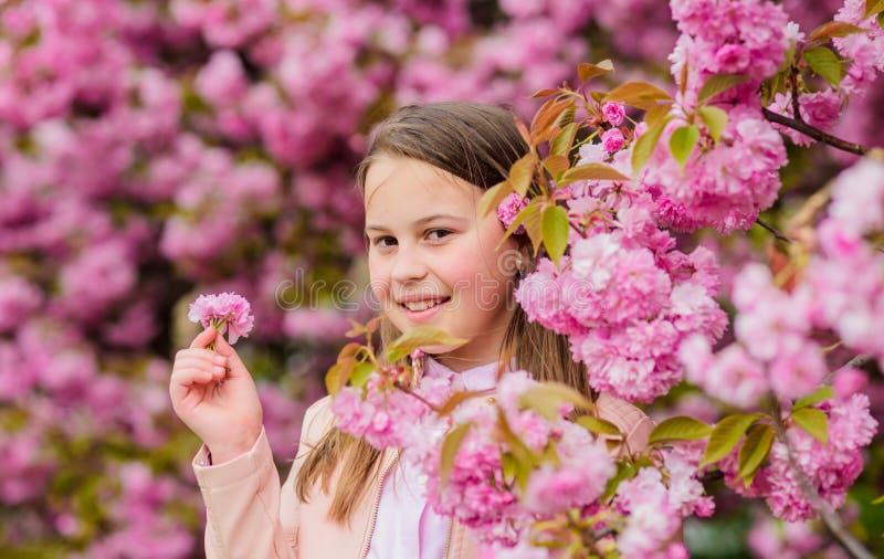 Aspirando flores Menina que aprecia o aroma floral Conceito da alergia do p?len A crian?a aprecia a flor de cerejeira sakura cria imagem de stock