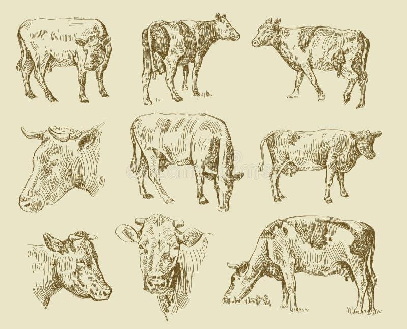 Aspiration de main de vaches illustration stock
