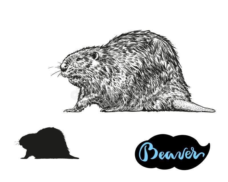 Aspiration de main de vecteur de castor l'illustration d'isolement sur le fond blanc illustration libre de droits